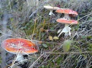 sellamat sienet