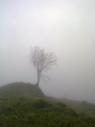 sellamatt puu sumussa