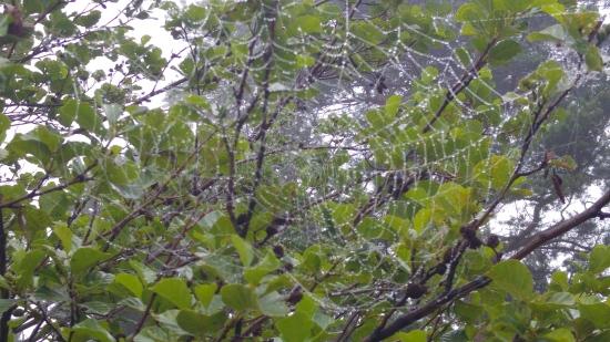 kotka luontopolku seitti2