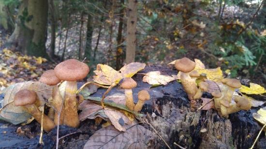 yksittaiset-sienet-kannolla-vaaka