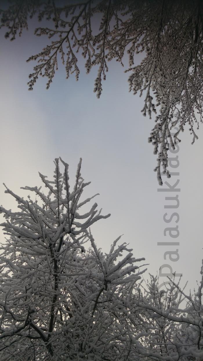 lumi-oksat-ja-puu