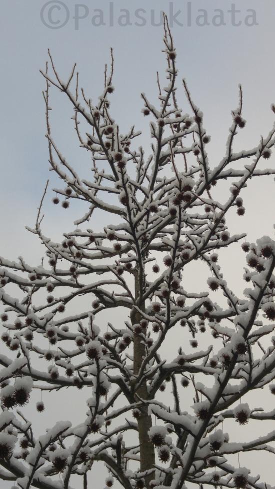 lumi-pampulat-puussa
