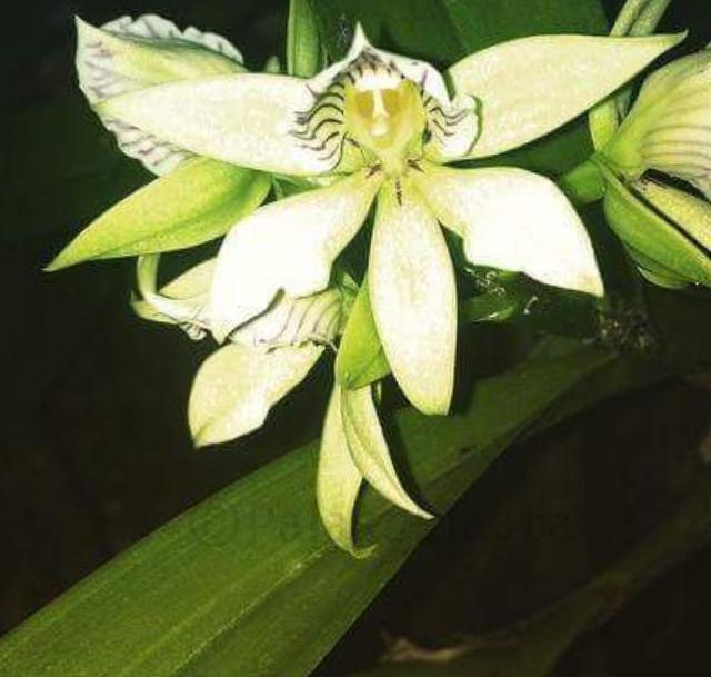 orkidean kukkatyyppi