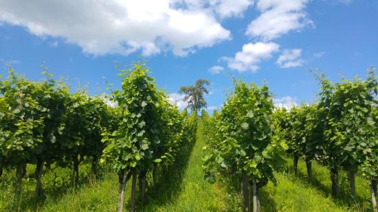 meilen viiniviljelykset