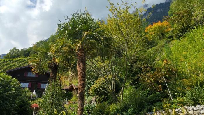 riviera 14 palmu