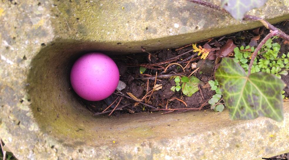 paasiainen muna p