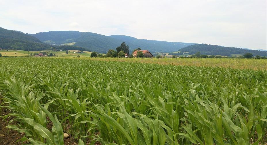 delemont maaseutua maissia talo 3 p