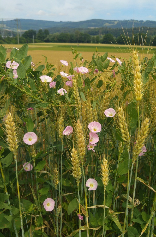 delemont viljaa kukkia 5 p