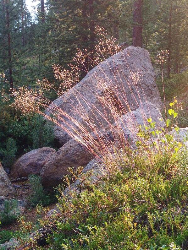 lappi luonto 1 heinät ja kivi
