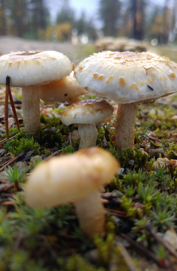 sienet 8 tiellä