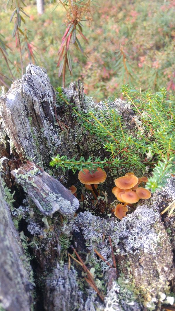 sieni 15 sieniä kannossa