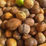 Pähkinässä ja muitasyysjuttuja