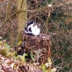 Kanto-kissa, lihaisa pulu ja muitakohtaamisia