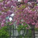 Uppoan kevätjuttuihin, mutta missäkevät?